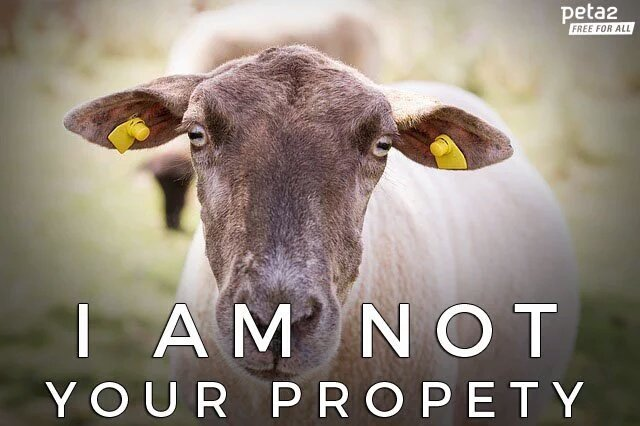 i am not your property